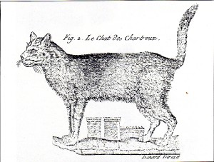 2.-old-chartreux.jpg
